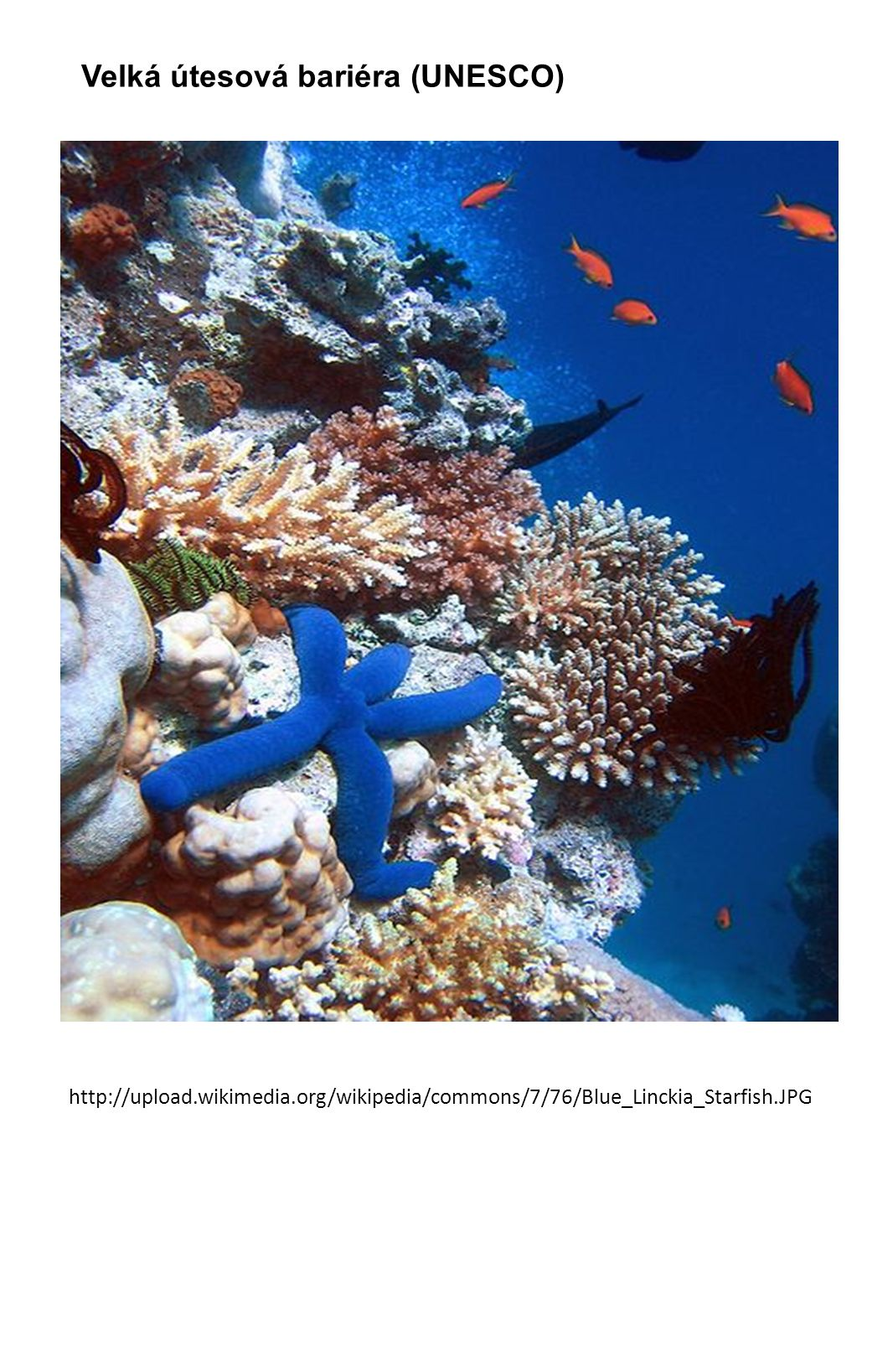 http://upload.wikimedia.org/wikipedia/commons/7/76/Blue_Linckia_Starfish.JPG Velká útesová bariéra (UNESCO)