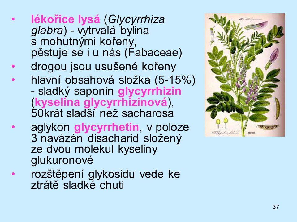 37 lékořice lysá (Glycyrrhiza glabra) - vytrvalá bylina s mohutnými kořeny, pěstuje se i u nás (Fabaceae) drogou jsou usušené kořeny hlavní obsahová s