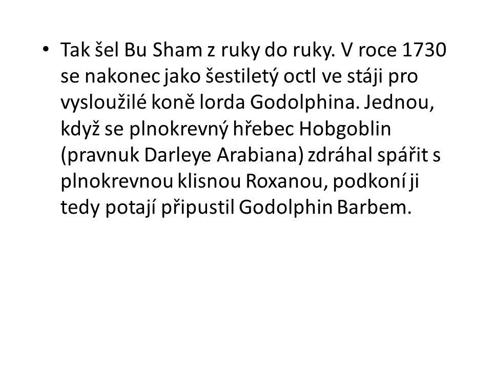 Tak šel Bu Sham z ruky do ruky. V roce 1730 se nakonec jako šestiletý octl ve stáji pro vysloužilé koně lorda Godolphina. Jednou, když se plnokrevný h