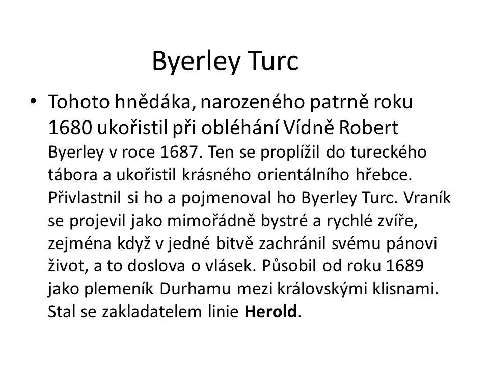 Byerley Turc Tohoto hnědáka, narozeného patrně roku 1680 ukořistil při obléhání Vídně Robert Byerley v roce 1687. Ten se proplížil do tureckého tábora