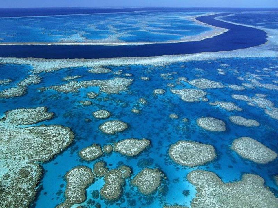 Velký bariérový útes - Queensland