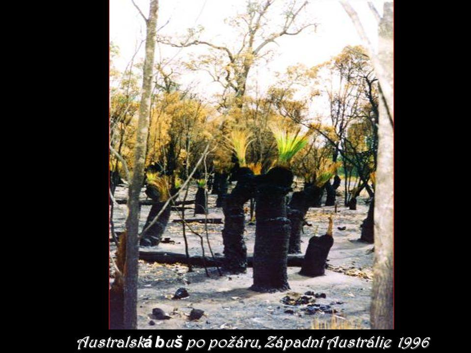 Australsk á b u š po požáru, Západní Austrálie 1996