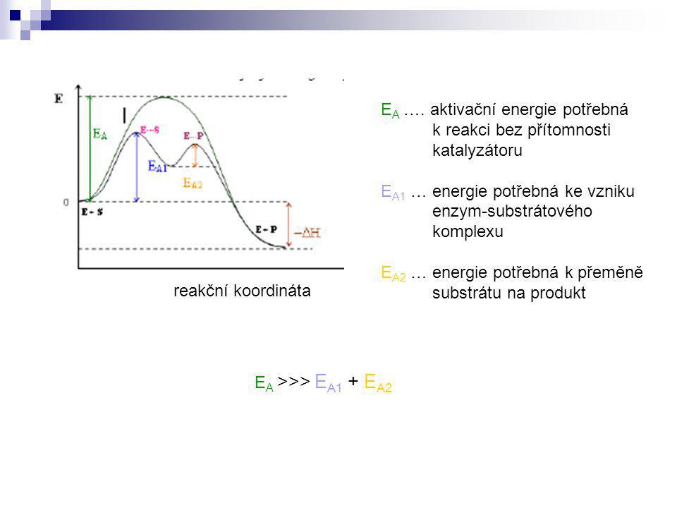 reakční koordináta E A …. aktivační energie potřebná k reakci bez přítomnosti katalyzátoru E A1 … energie potřebná ke vzniku enzym-substrátového kompl