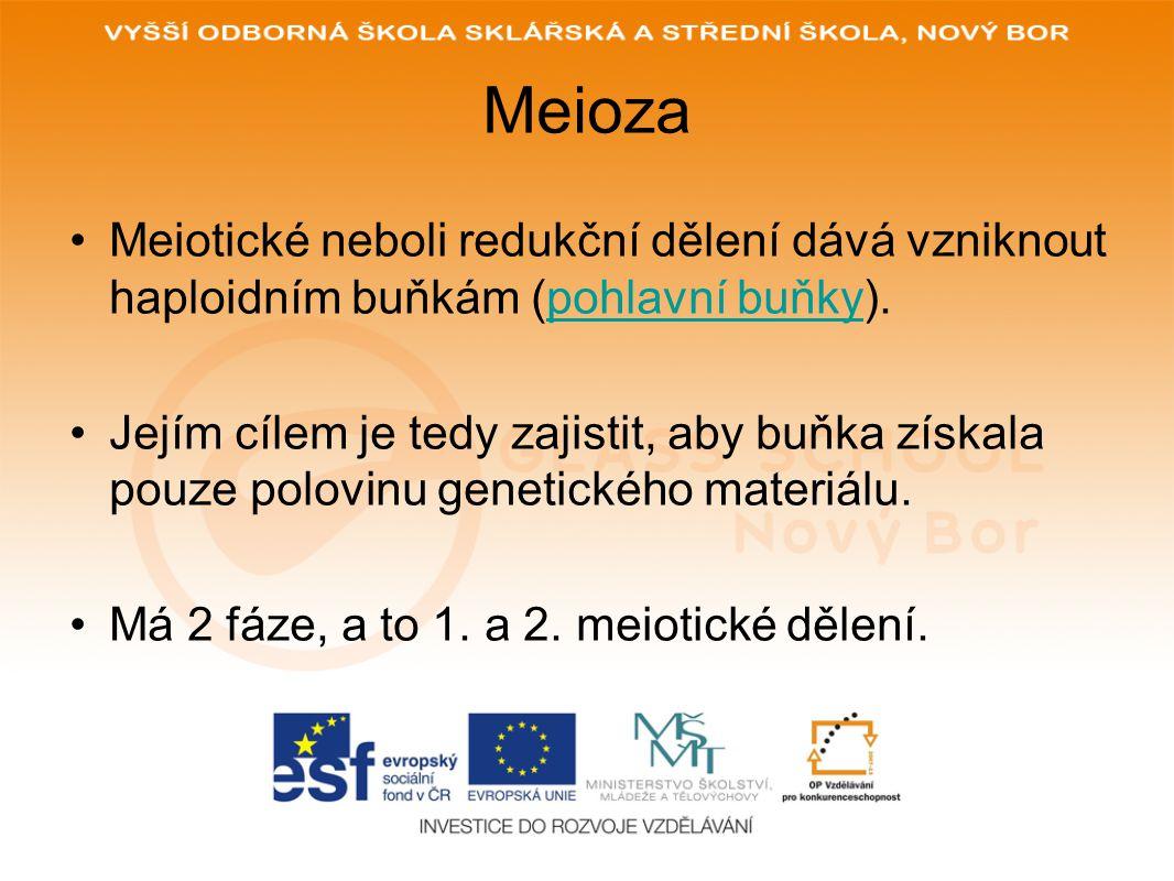 Meioza Meiotické neboli redukční dělení dává vzniknout haploidním buňkám (pohlavní buňky).pohlavní buňky Jejím cílem je tedy zajistit, aby buňka získa