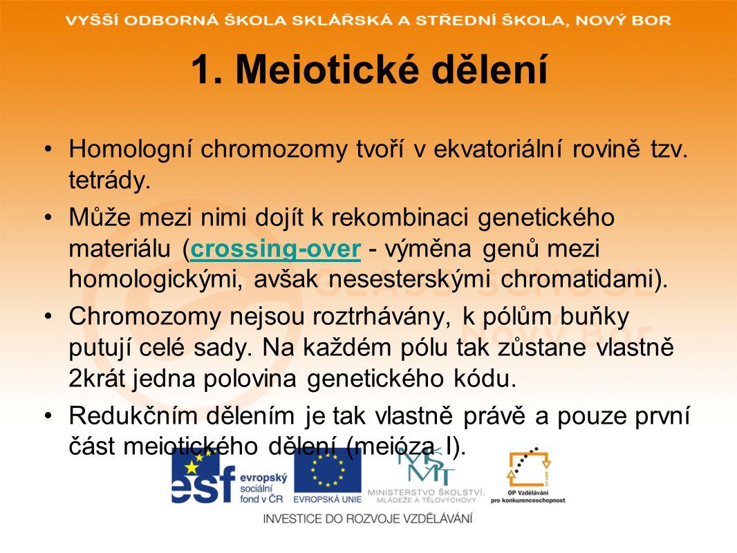 1. Meiotické dělení Homologní chromozomy tvoří v ekvatoriální rovině tzv. tetrády. Může mezi nimi dojít k rekombinaci genetického materiálu (crossing-