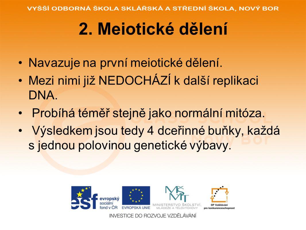 2. Meiotické dělení Navazuje na první meiotické dělení. Mezi nimi již NEDOCHÁZÍ k další replikaci DNA. Probíhá téměř stejně jako normální mitóza. Výsl