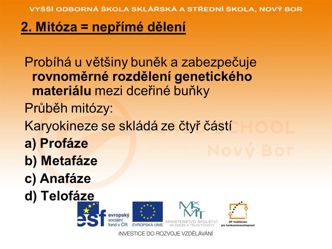 2. Mitóza = nepřímé dělení Probíhá u většiny buněk a zabezpečuje rovnoměrné rozdělení genetického materiálu mezi dceřiné buňky Průběh mitózy: Karyokin