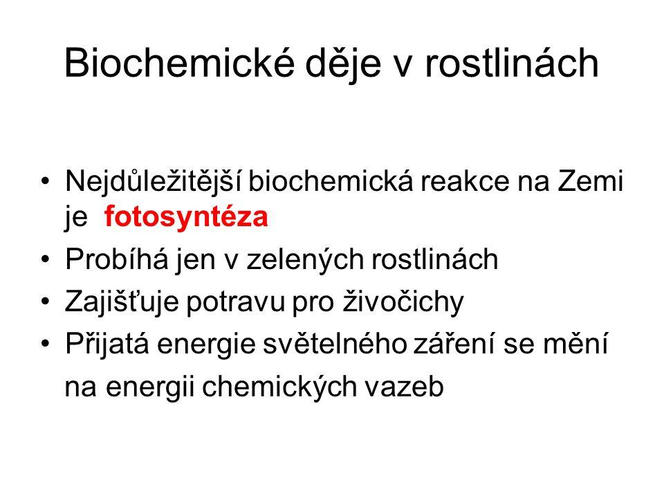 Biochemické děje v rostlinách Nejdůležitější biochemická reakce na Zemi je fotosyntéza Probíhá jen v zelených rostlinách Zajišťuje potravu pro živočichy Přijatá energie světelného záření se mění na energii chemických vazeb