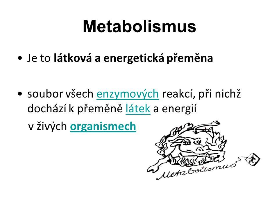 Látkový metabolizmus živočichů Pomocí složitých metabolických procesů vytvářejí živočichové z potravy látky nezbytné pro svůj růst, pohyb, udržování tělesné teploty Energii potřebnou k životu získávají - dýcháním: rovnice C 6 H 12 O 6 + 6 O 2  6 H 2 O + 6 CO 2 + energie