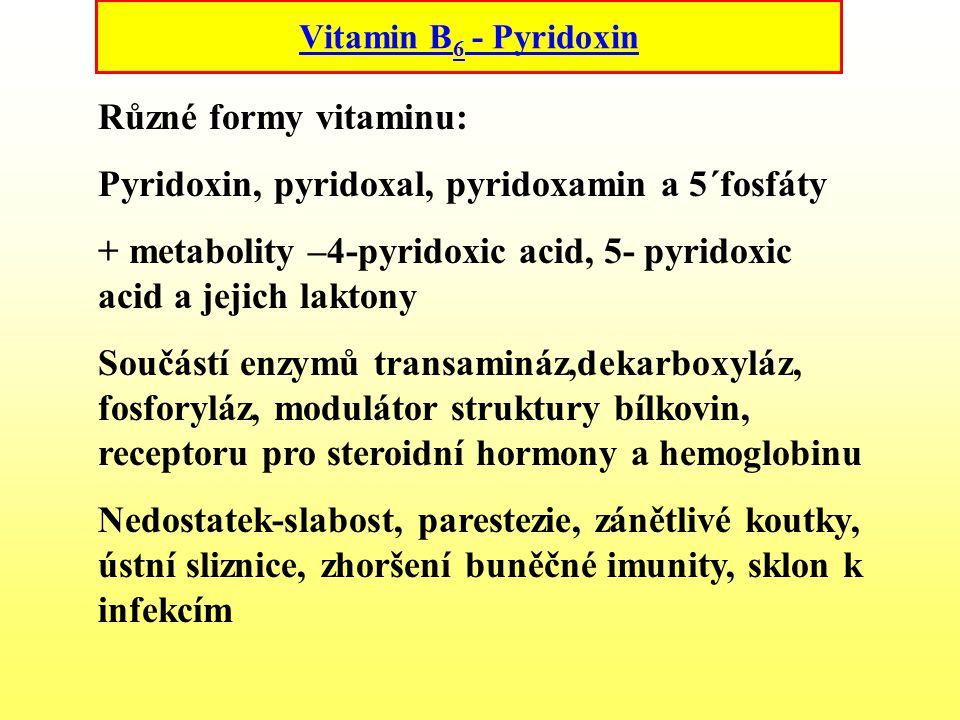 Vitamin B 6 - Pyridoxin Různé formy vitaminu: Pyridoxin, pyridoxal, pyridoxamin a 5´fosfáty + metabolity –4-pyridoxic acid, 5- pyridoxic acid a jejich