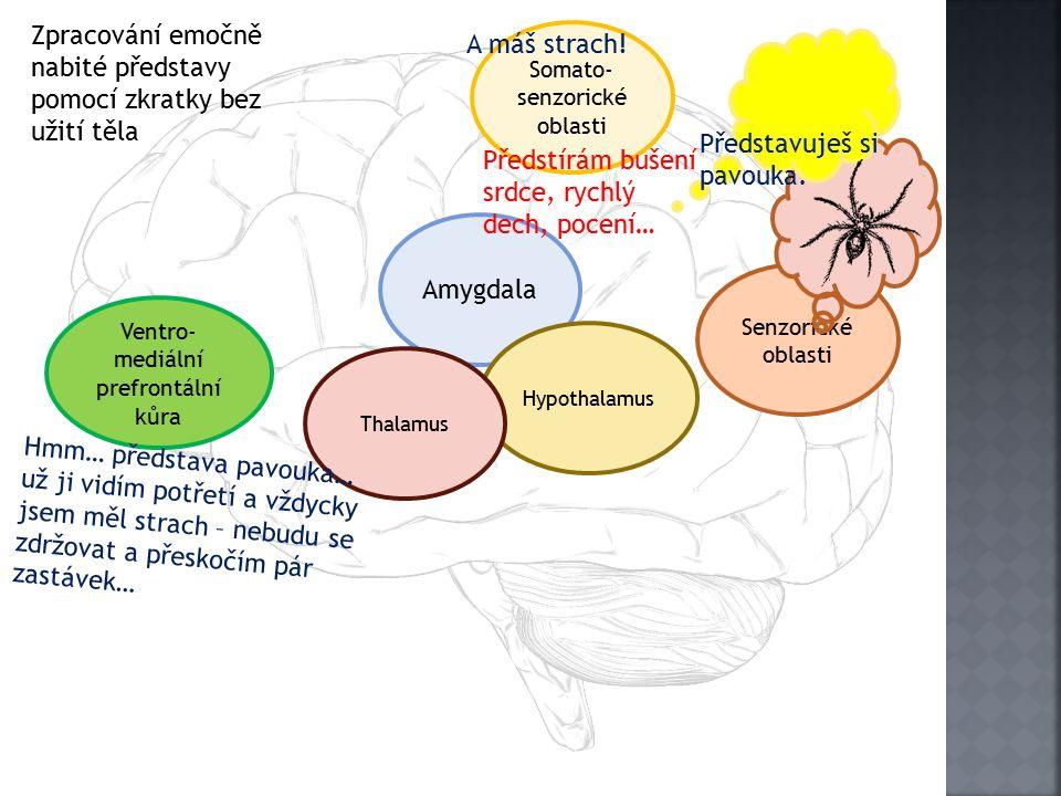 Senzorické oblasti Amygdala Hypothalamus Somato- senzorické oblasti Ventro- mediální prefrontální kůra Thalamus A máš strach.