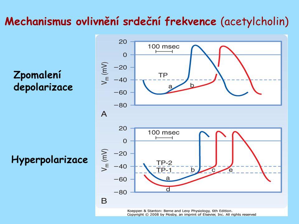 Mechanismus ovlivnění srdeční frekvence (acetylcholin) Zpomalení depolarizace Hyperpolarizace
