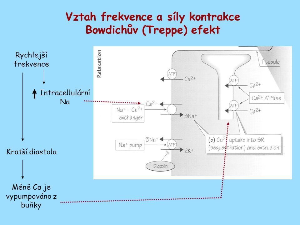 Vztah frekvence a síly kontrakce Bowdichův (Treppe) efekt Rychlejší frekvence Intracellulární Na Kratší diastola Méně Ca je vypumpováno z buňky