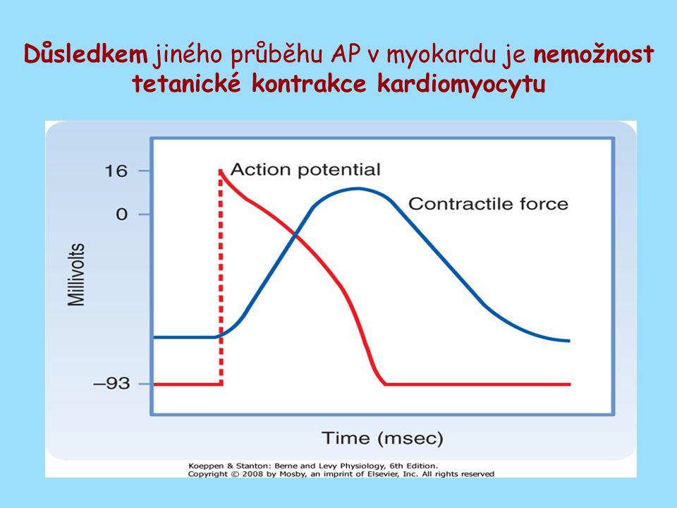 Délka trvání fáze plató a tedy celého AP je ovlivněna K+ kanály a liší se v různých částech myokardu