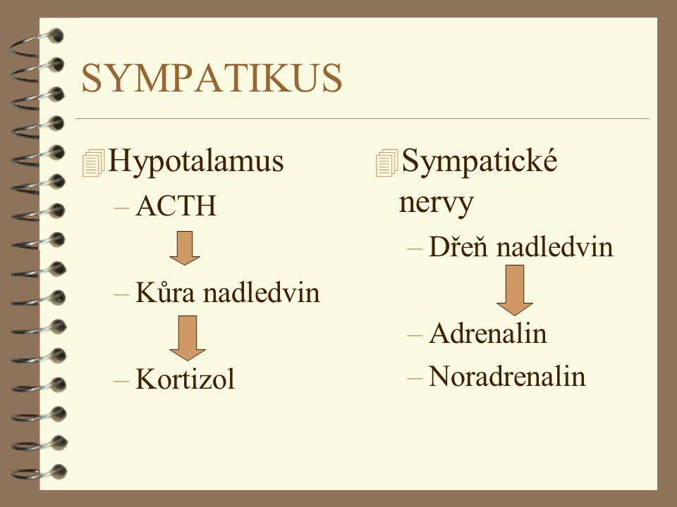 SYMPATIKUS 4 Hypotalamus –ACTH –Kůra nadledvin –Kortizol 4 Sympatické nervy –Dřeň nadledvin –Adrenalin –Noradrenalin