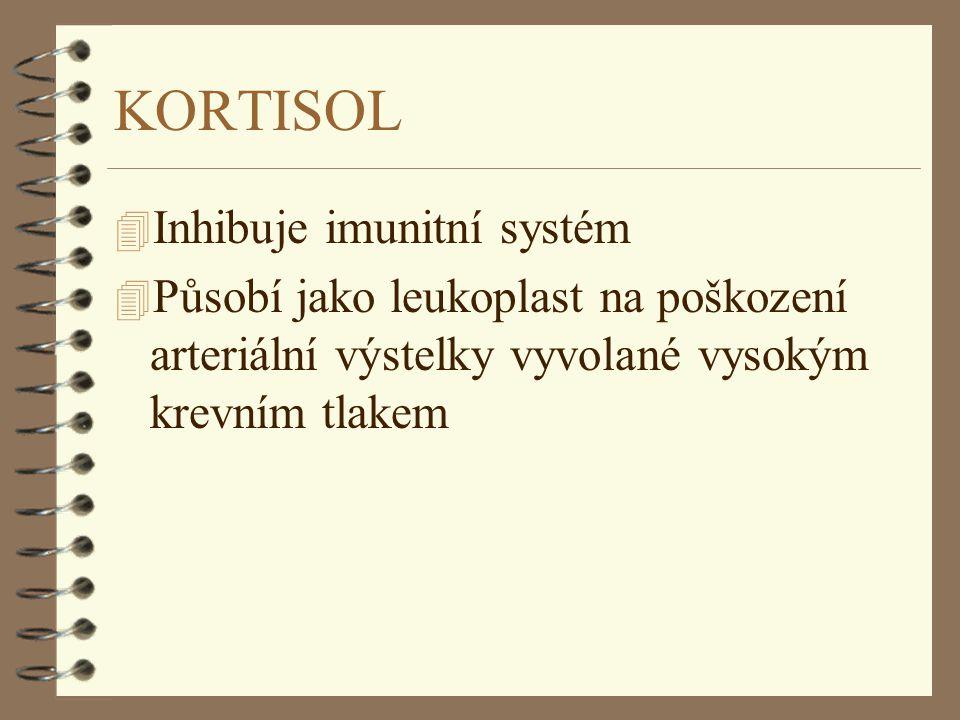 KORTISOL 4 Inhibuje imunitní systém 4 Působí jako leukoplast na poškození arteriální výstelky vyvolané vysokým krevním tlakem