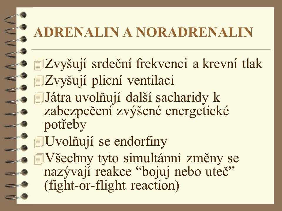 ADRENALIN A NORADRENALIN 4 Zvyšují srdeční frekvenci a krevní tlak 4 Zvyšují plicní ventilaci 4 Játra uvolňují další sacharidy k zabezpečení zvýšené e