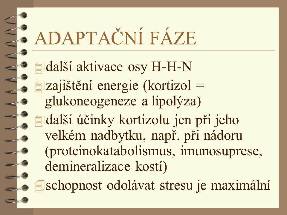 ADAPTAČNÍ FÁZE 4 další aktivace osy H-H-N 4 zajištění energie (kortizol = glukoneogeneze a lipolýza) 4 další účinky kortizolu jen při jeho velkém nadb