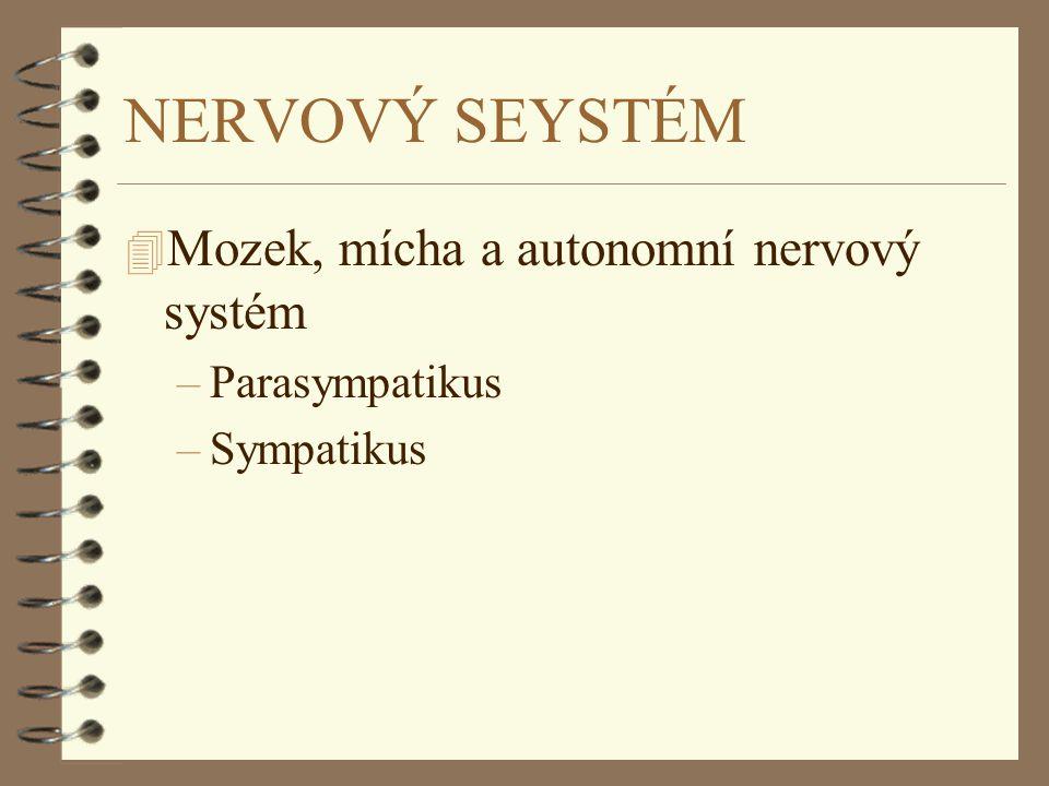 NERVOVÝ SEYSTÉM 4 Mozek, mícha a autonomní nervový systém –Parasympatikus –Sympatikus