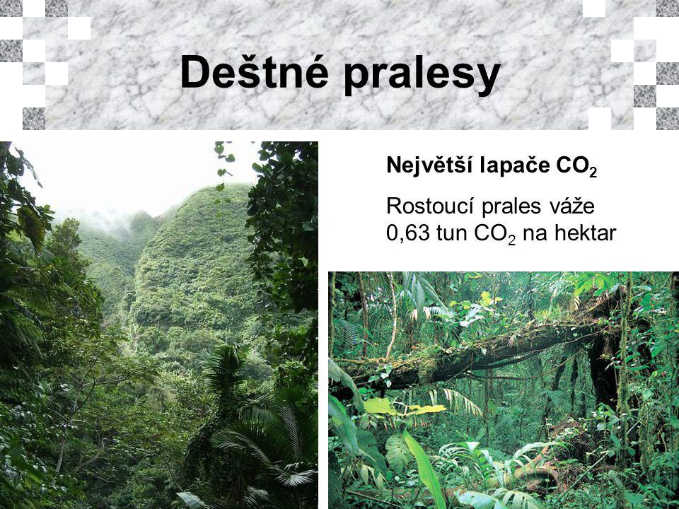 Deštné pralesy Největší lapače CO 2 Rostoucí prales váže 0,63 tun CO 2 na hektar