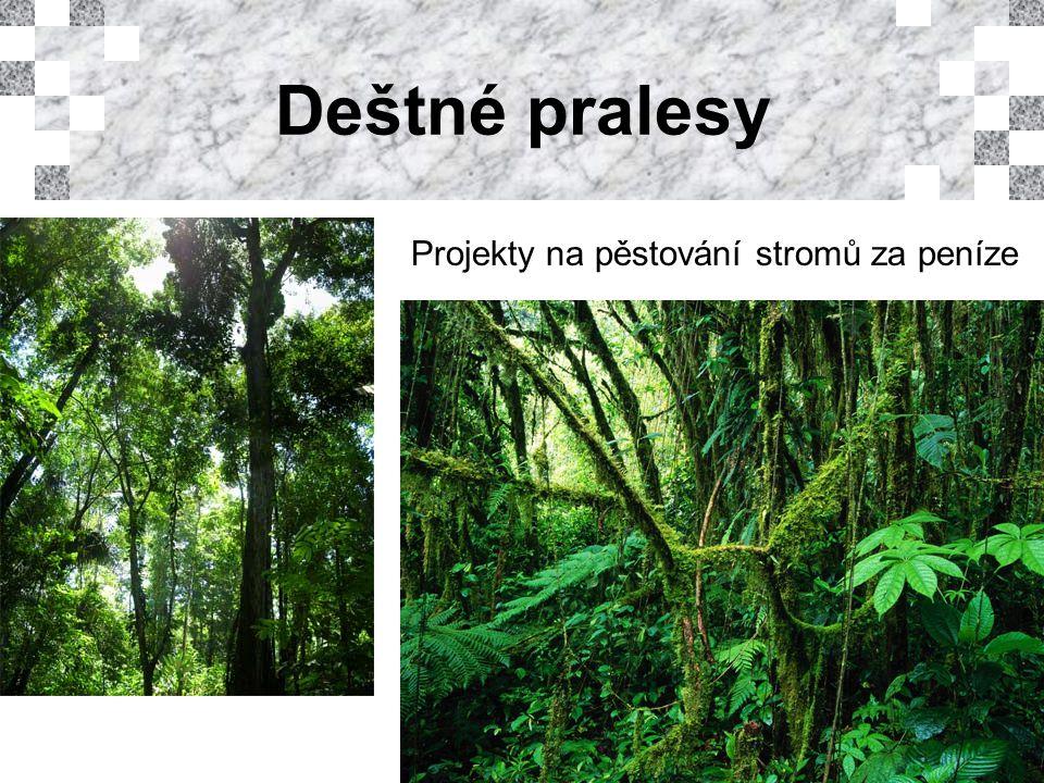 Deštné pralesy Projekty na pěstování stromů za peníze