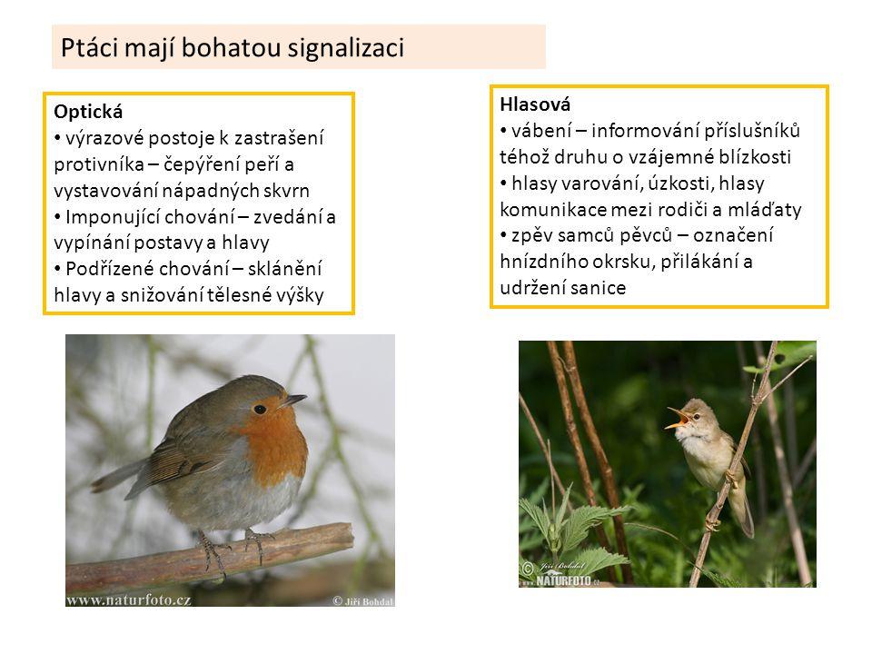 Ptáci mají bohatou signalizaci Optická výrazové postoje k zastrašení protivníka – čepýření peří a vystavování nápadných skvrn Imponující chování – zve