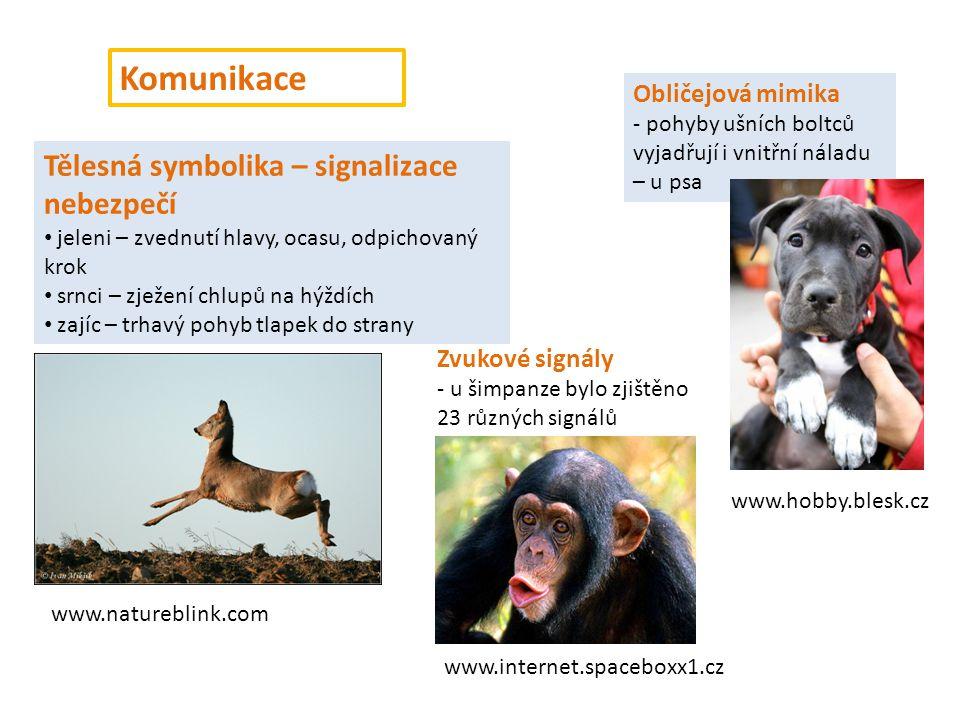 Komunikace Tělesná symbolika – signalizace nebezpečí jeleni – zvednutí hlavy, ocasu, odpichovaný krok srnci – zježení chlupů na hýždích zajíc – trhavý