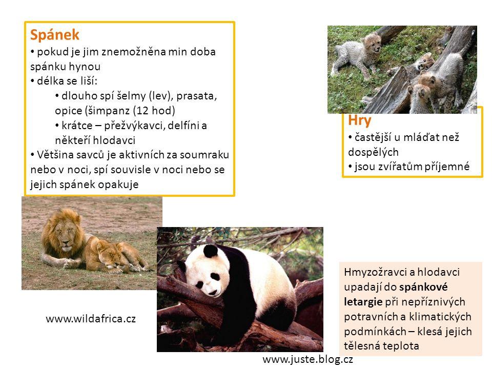 Spánek pokud je jim znemožněna min doba spánku hynou délka se liší: dlouho spí šelmy (lev), prasata, opice (šimpanz (12 hod) krátce – přežvýkavci, del