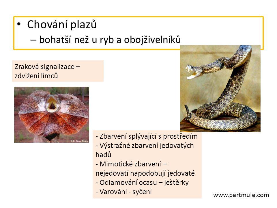 Chování plazů – bohatší než u ryb a obojživelníků Zraková signalizace – zdvižení límců - Zbarvení splývající s prostředím - Výstražné zbarvení jedovat