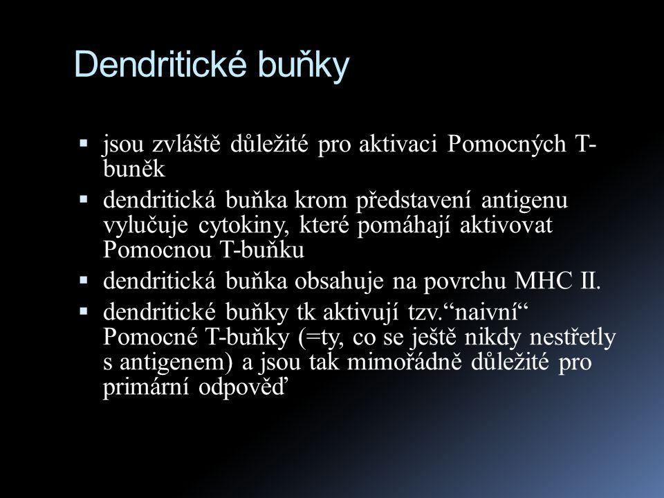 """Dendritické buňky  dendritické buňky se nachází převážně v epidermis a v řadě dalších tkáních, kde """"loví antigeny  poté se přesunou do lymfatických uzlin, kde pomocí MHC II."""