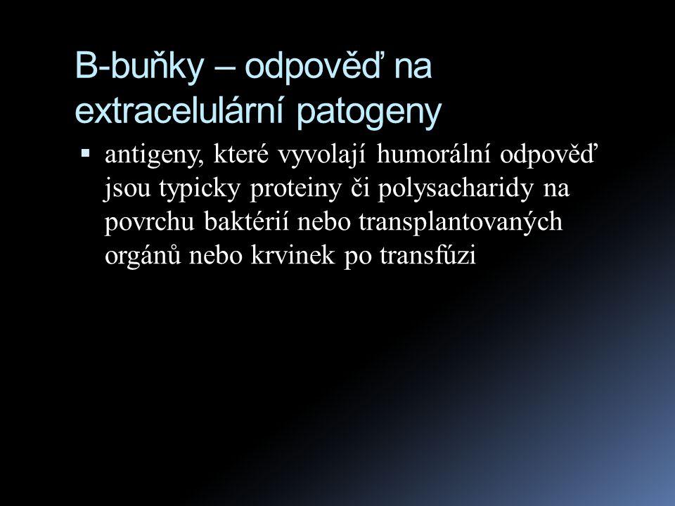 B-buňky – odpověď na extracelulární patogeny  antigeny, které vyvolají humorální odpověď jsou typicky proteiny či polysacharidy na povrchu baktérií n