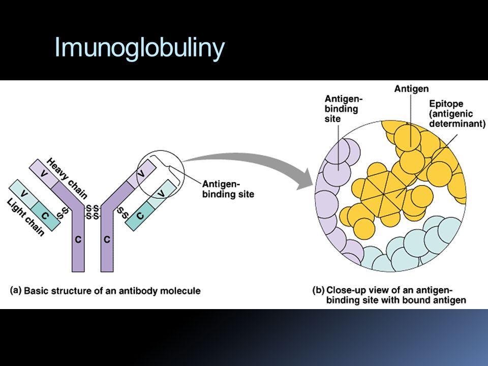 Immunoglobuliny  Protilátky = skupina globulárních proteinů zvaných immunoglobuliny