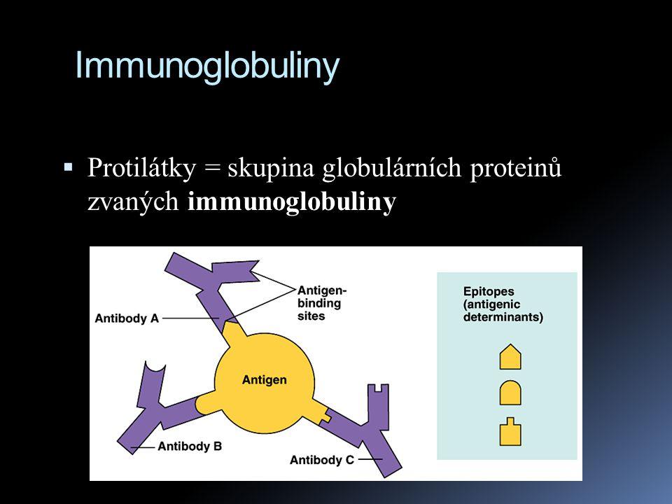 B buňky  B buňka po stimulaci dává vznik klonu tisíců plasmových buněk  každá plasmová buňka je schopna každou vteřinu vyprodukovat 2 000 molekul protilátek po celou dobu svého 4 - 5 ti denního života !