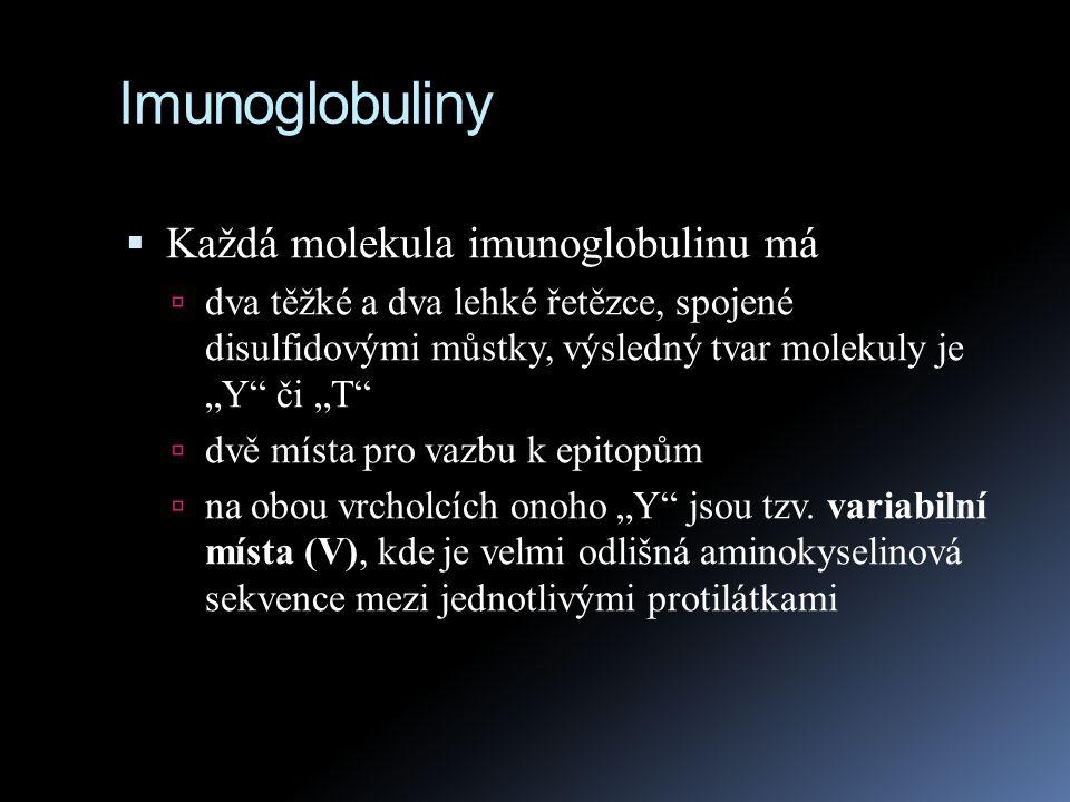 """Imunoglobuliny  Každá molekula imunoglobulinu má  dva těžké a dva lehké řetězce, spojené disulfidovými můstky, výsledný tvar molekuly je """"Y"""" či """"T"""""""