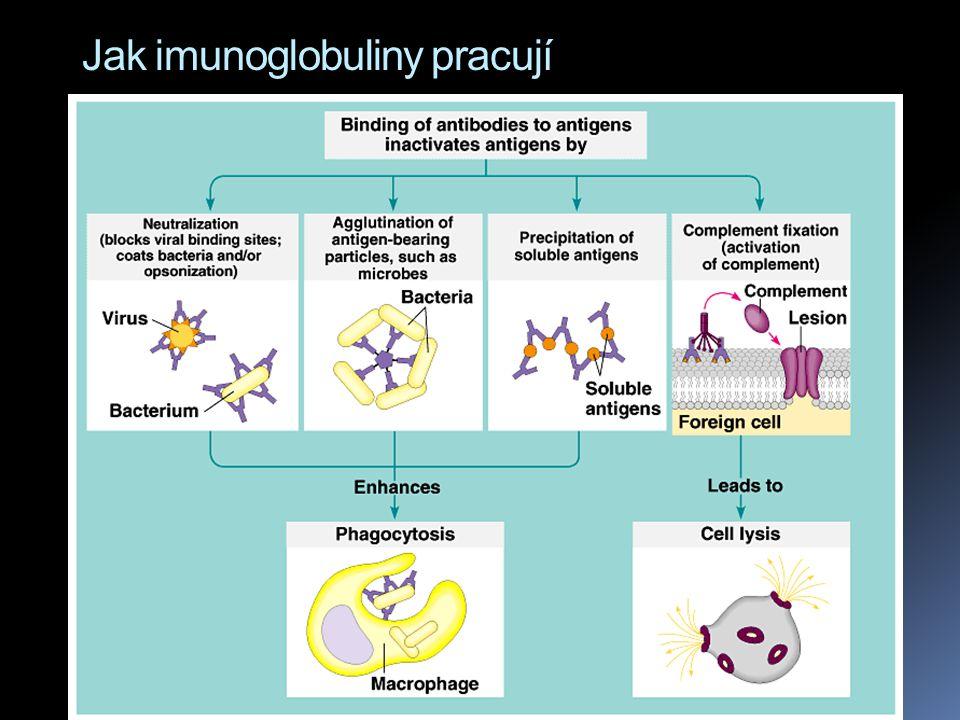  Neutralizace - protilátky se naváží na antigen a znemožní jeho činnost.