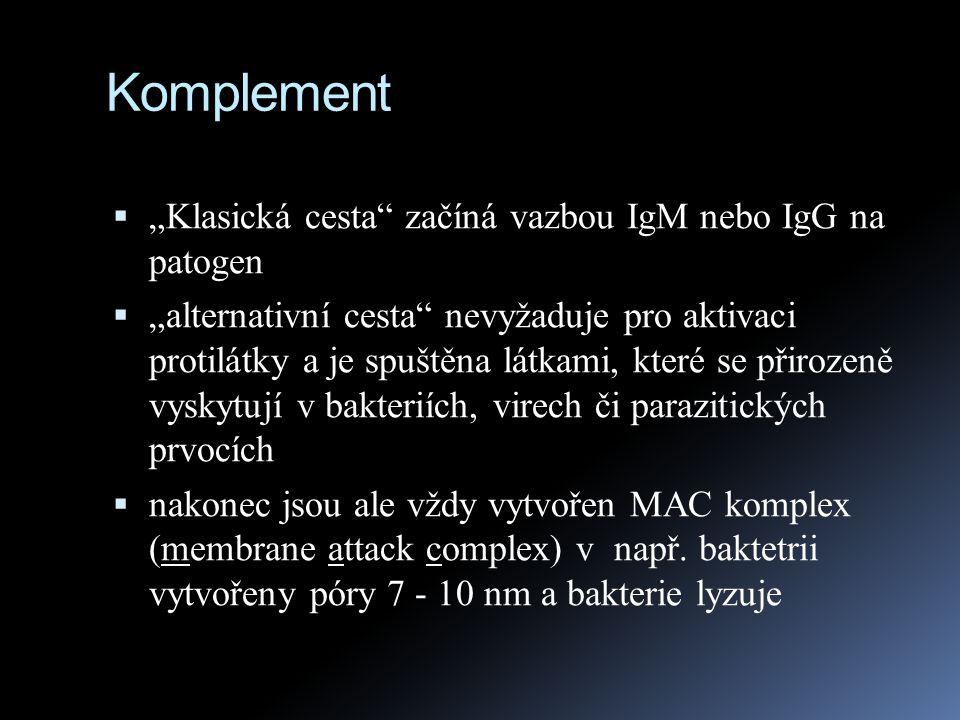 """Komplement  """"Klasická cesta"""" začíná vazbou IgM nebo IgG na patogen  """"alternativní cesta"""" nevyžaduje pro aktivaci protilátky a je spuštěna látkami, k"""