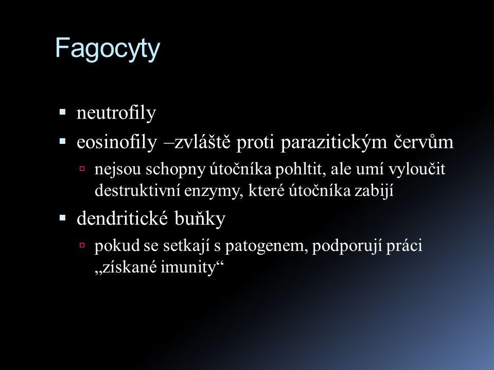 Fagocyty  neutrofily  eosinofily –zvláště proti parazitickým červům  nejsou schopny útočníka pohltit, ale umí vyloučit destruktivní enzymy, které ú
