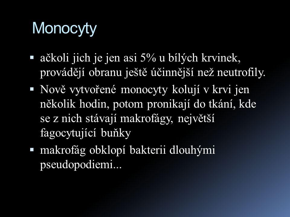 Monocyty  ačkoli jich je jen asi 5% u bílých krvinek, provádějí obranu ještě účinnější než neutrofily.  Nově vytvořené monocyty kolují v krvi jen ně
