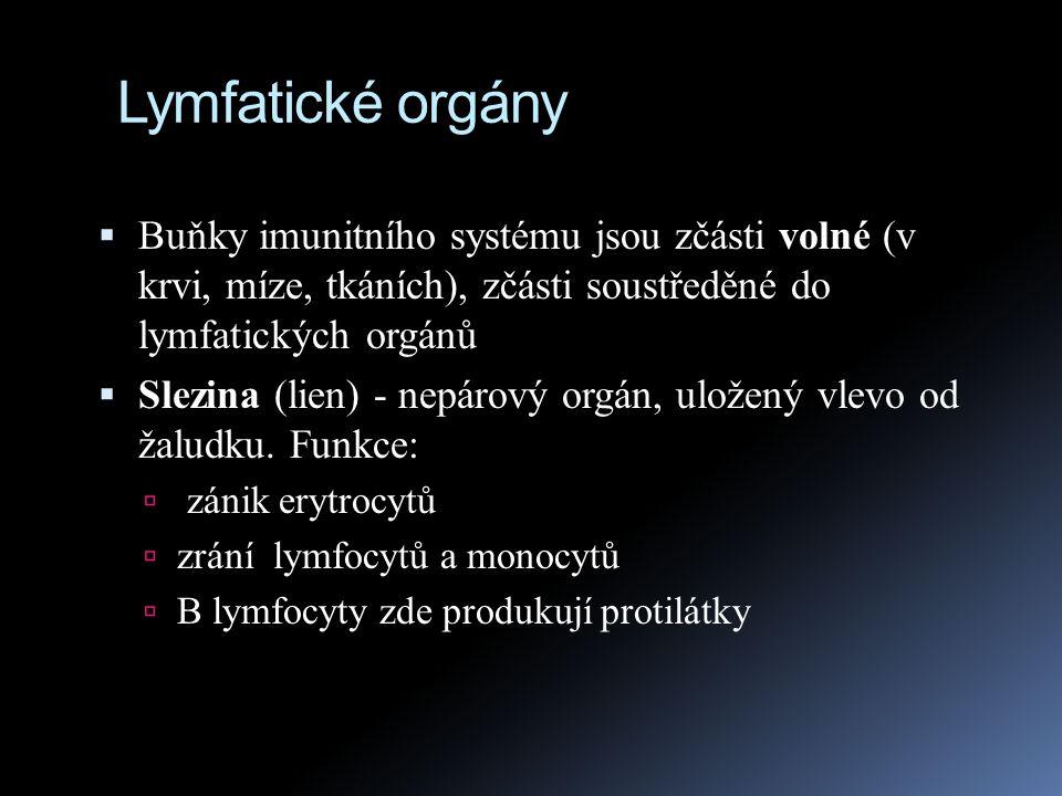 Lymfatické orgány  Buňky imunitního systému jsou zčásti volné (v krvi, míze, tkáních), zčásti soustředěné do lymfatických orgánů  Slezina (lien) - n