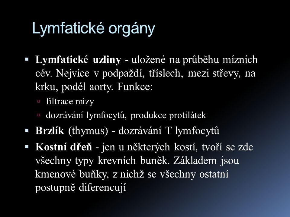 Lymfatické orgány  Lymfatické uzliny - uložené na průběhu mízních cév. Nejvíce v podpaždí, tříslech, mezi střevy, na krku, podél aorty. Funkce:  fil
