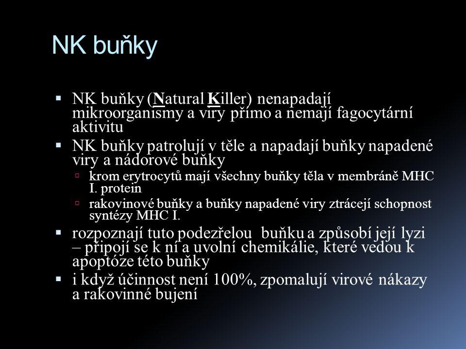 NK buňky  NK buňky (Natural Killer) nenapadají mikroorganismy a viry přímo a nemají fagocytární aktivitu  NK buňky patrolují v těle a napadají buňky