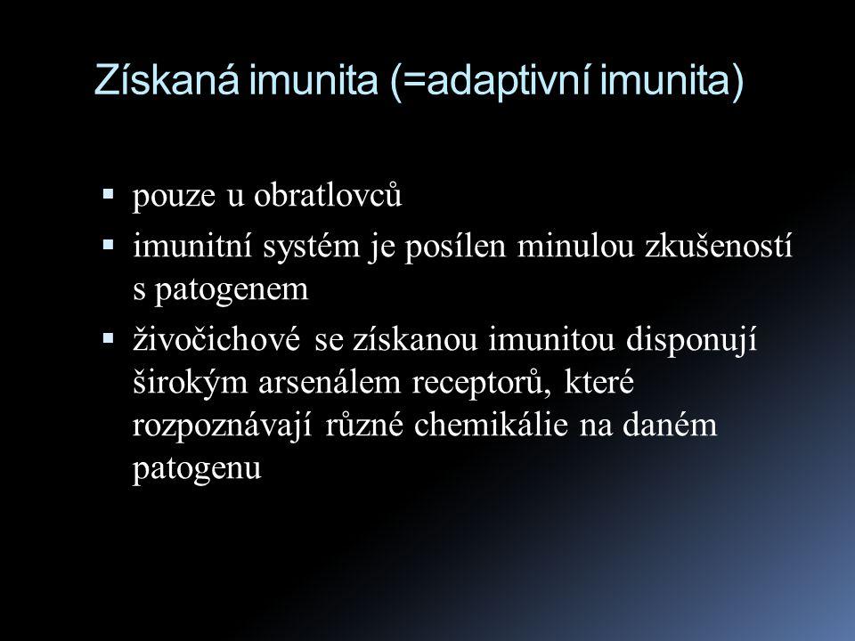 Získaná imunita (=adaptivní imunita)  pouze u obratlovců  imunitní systém je posílen minulou zkušeností s patogenem  živočichové se získanou imunit