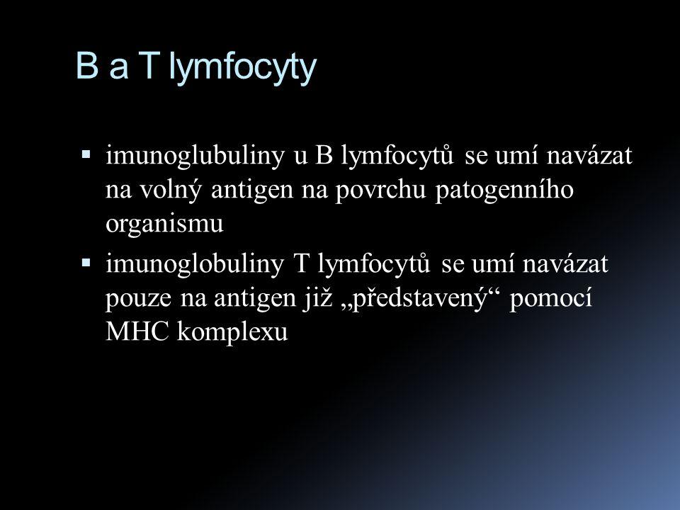 B a T lymfocyty  imunoglubuliny u B lymfocytů se umí navázat na volný antigen na povrchu patogenního organismu  imunoglobuliny T lymfocytů se umí na