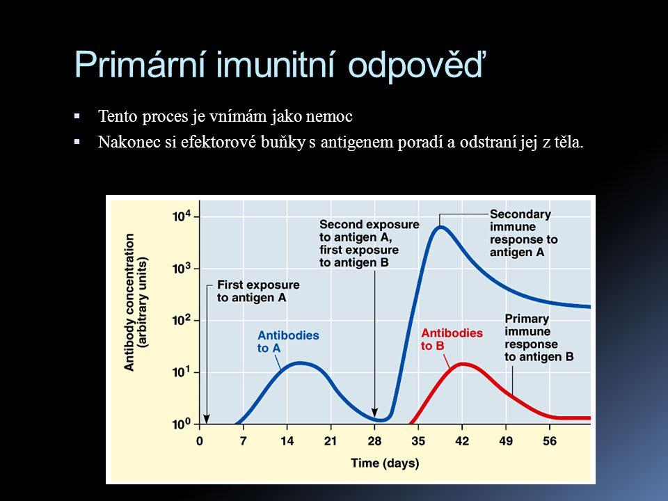 Sekundární imunitní odpověď  Pokud se člověk setká se stejným antigenem později v životě, odpověď organismu je rychlejší (2 - 7 dnů) a prudší a trvá déle