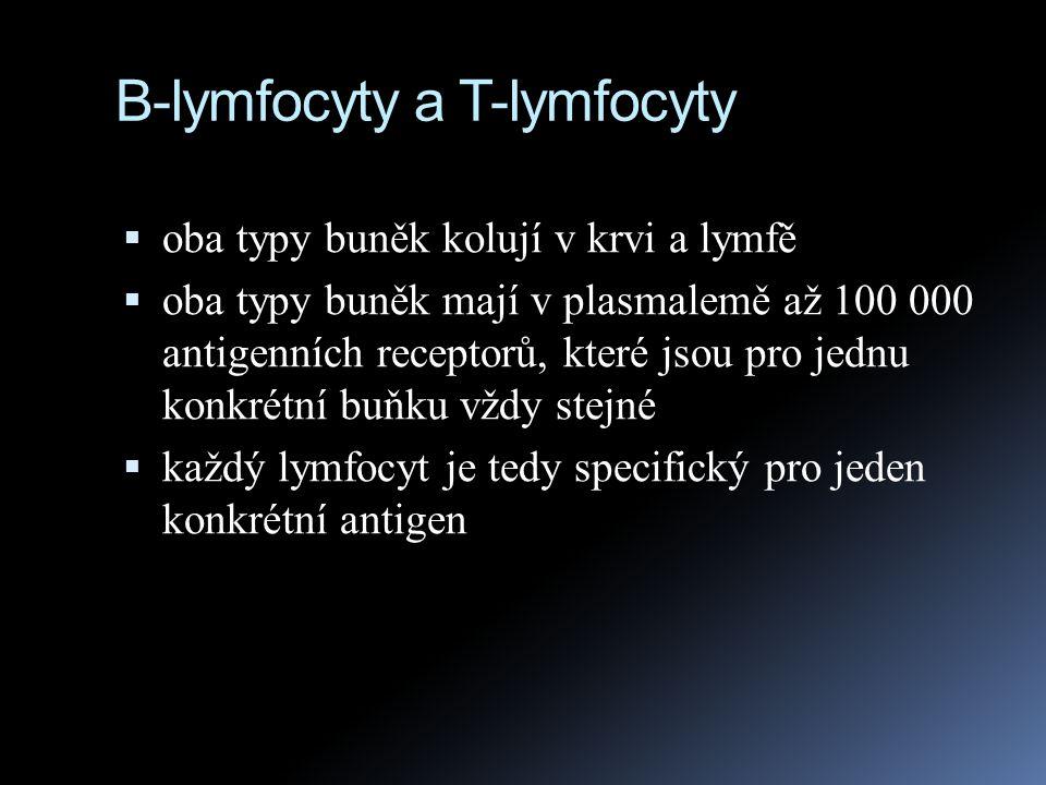 B-lymfocyty a T-lymfocyty  oba typy buněk kolují v krvi a lymfě  oba typy buněk mají v plasmalemě až 100 000 antigenních receptorů, které jsou pro j