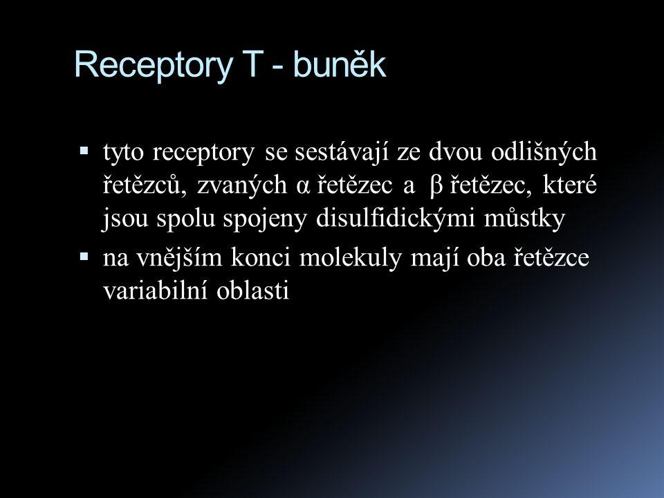 Receptory T - buněk  tyto receptory se sestávají ze dvou odlišných řetězců, zvaných α řetězec a β řetězec, které jsou spolu spojeny disulfidickými mů