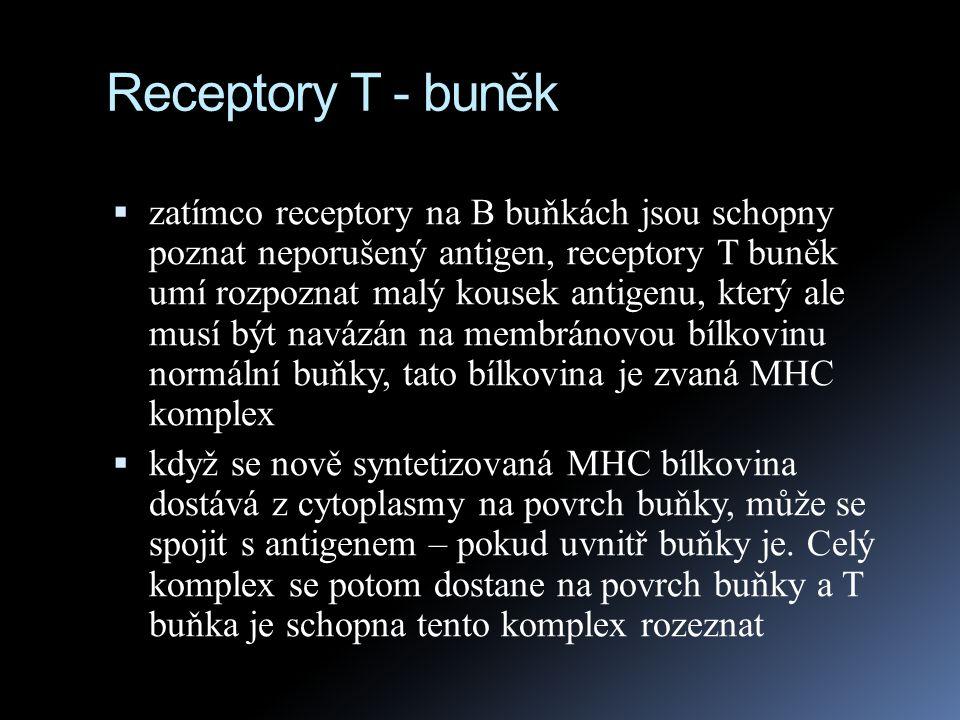 Interakce T – buněk s MHC komplexem Antigenní presentace: receptor na T-buňce pozná část z cizího organismu nebo cizí molekuly (antigenní fagment), který vystaví na svém povrchu napadená buňka MHC I.