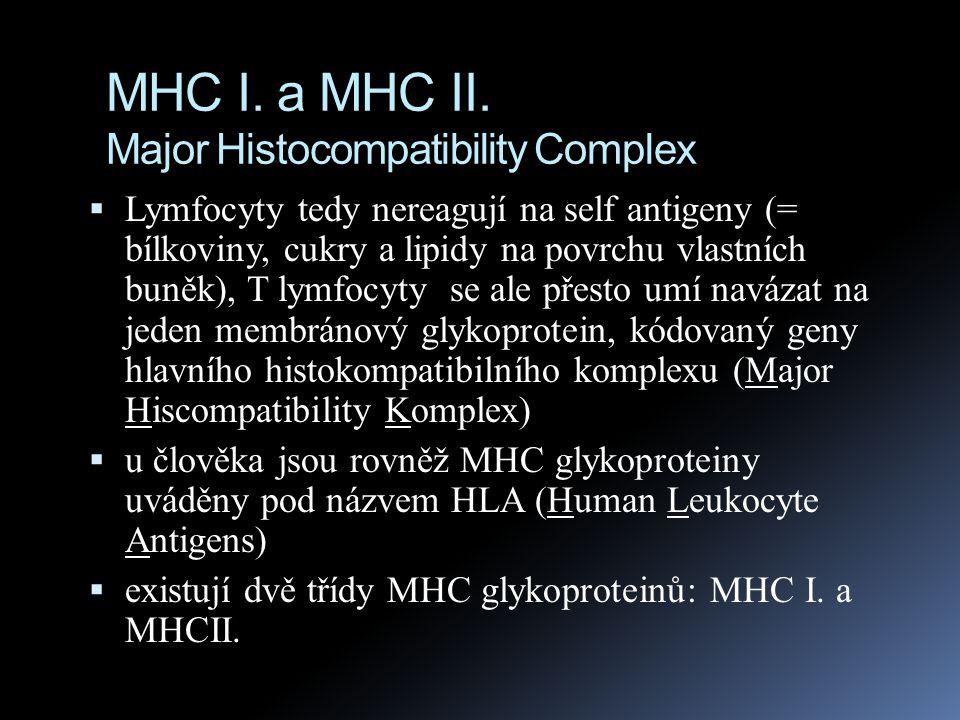 MHC I. a MHC II. Major Histocompatibility Complex  Lymfocyty tedy nereagují na self antigeny (= bílkoviny, cukry a lipidy na povrchu vlastních buněk)