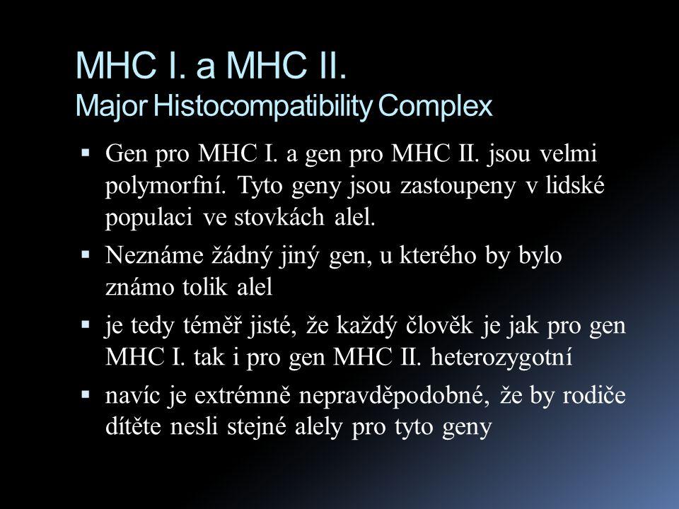 MHC I. a MHC II. Major Histocompatibility Complex  Gen pro MHC I. a gen pro MHC II. jsou velmi polymorfní. Tyto geny jsou zastoupeny v lidské populac