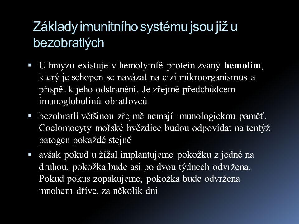 Základy imunitního systému jsou již u bezobratlých  U hmyzu existují v hemolymfě rovněž buňky zvané hemocyty, které pohlcují mikroby fagocytózou, nebo obklopují velké parazity  některé hemocyty obsahují enzym fenoloxidázu.